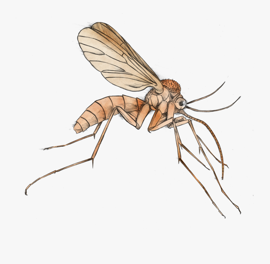 Mosquito Clip Art Free Clipart Images - Clipart Transparent Background Mosquito, Transparent Clipart