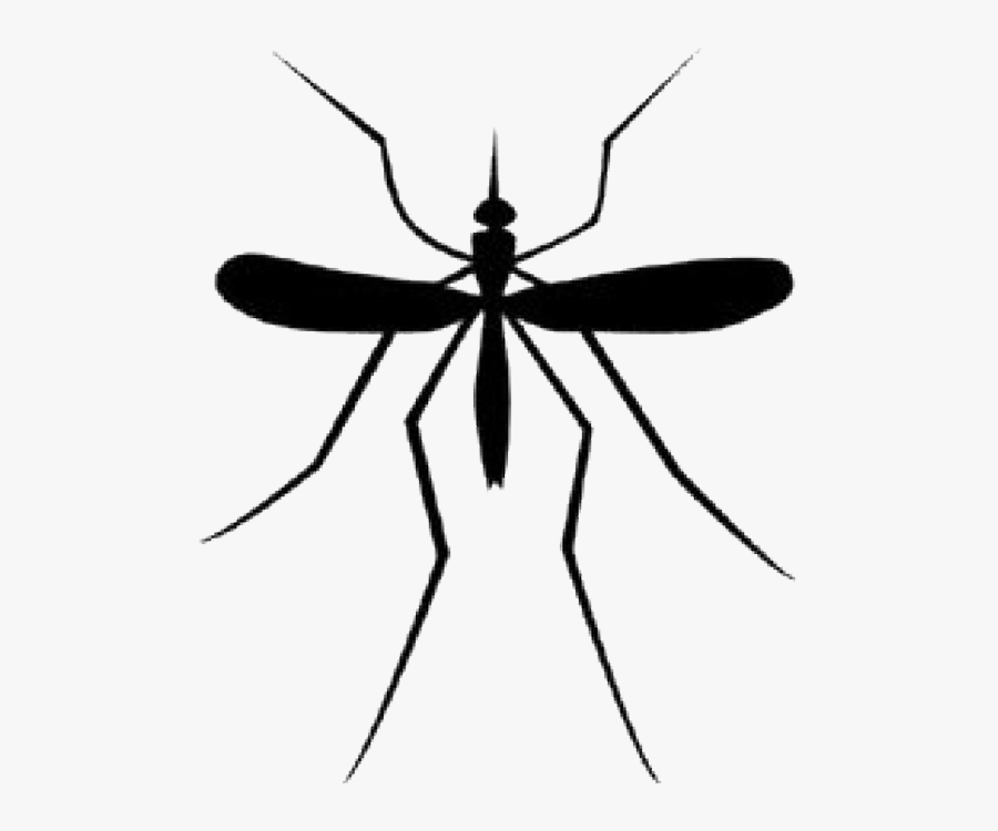 Mosquito Download Png - Transparent Background Mosquito Clipart, Transparent Clipart