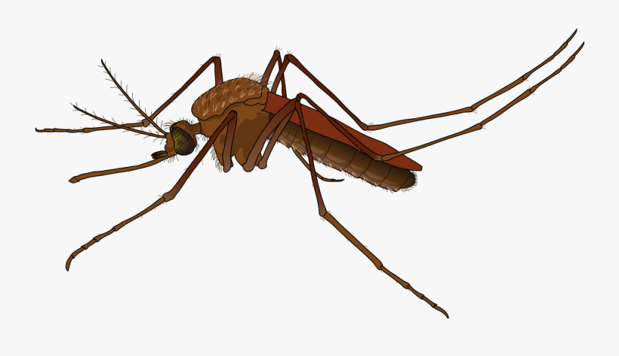 Mosquito Free To Use Clip Art - Mosquito Png, Transparent Clipart