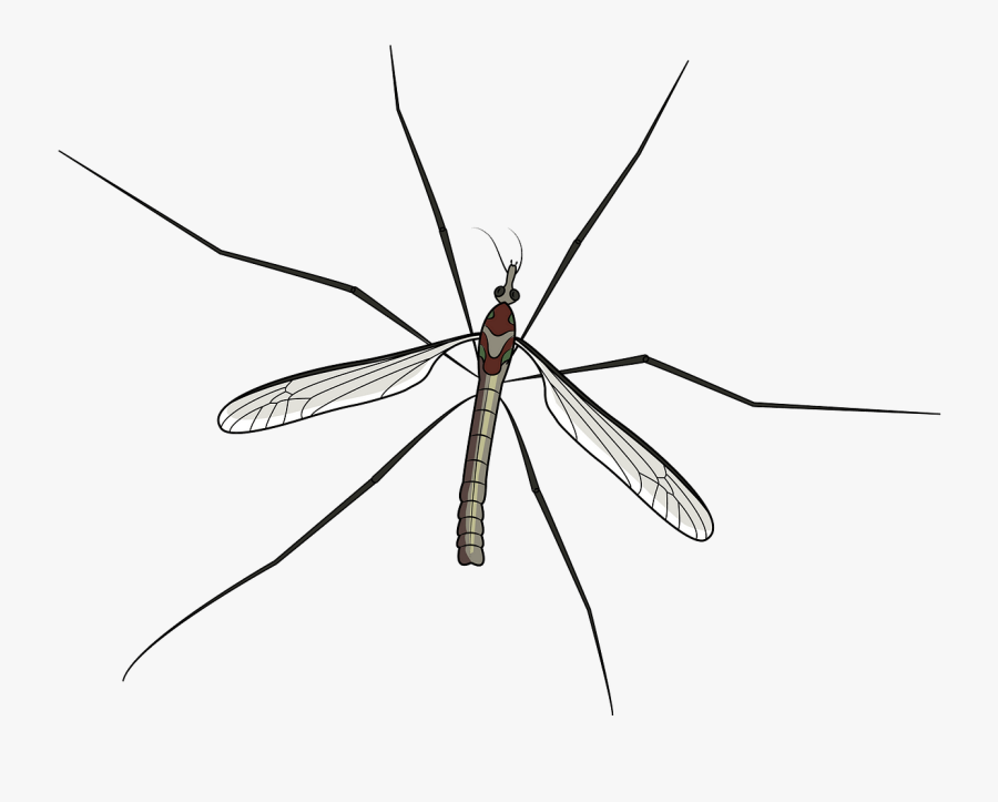 Net-winged Insects, Transparent Clipart