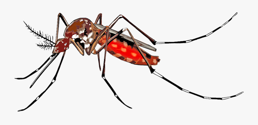Collection Of Free Mosquito Drawing Aedes Aegypti Download - Transparent Background Mosquito Png, Transparent Clipart
