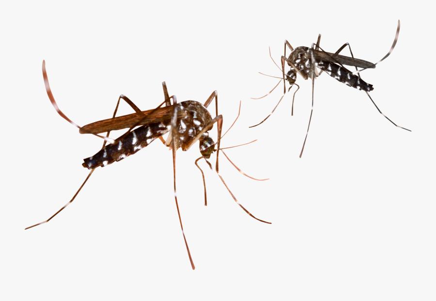 Transparent Mosquito Clipart - Clipart Transparent Background Mosquito, Transparent Clipart