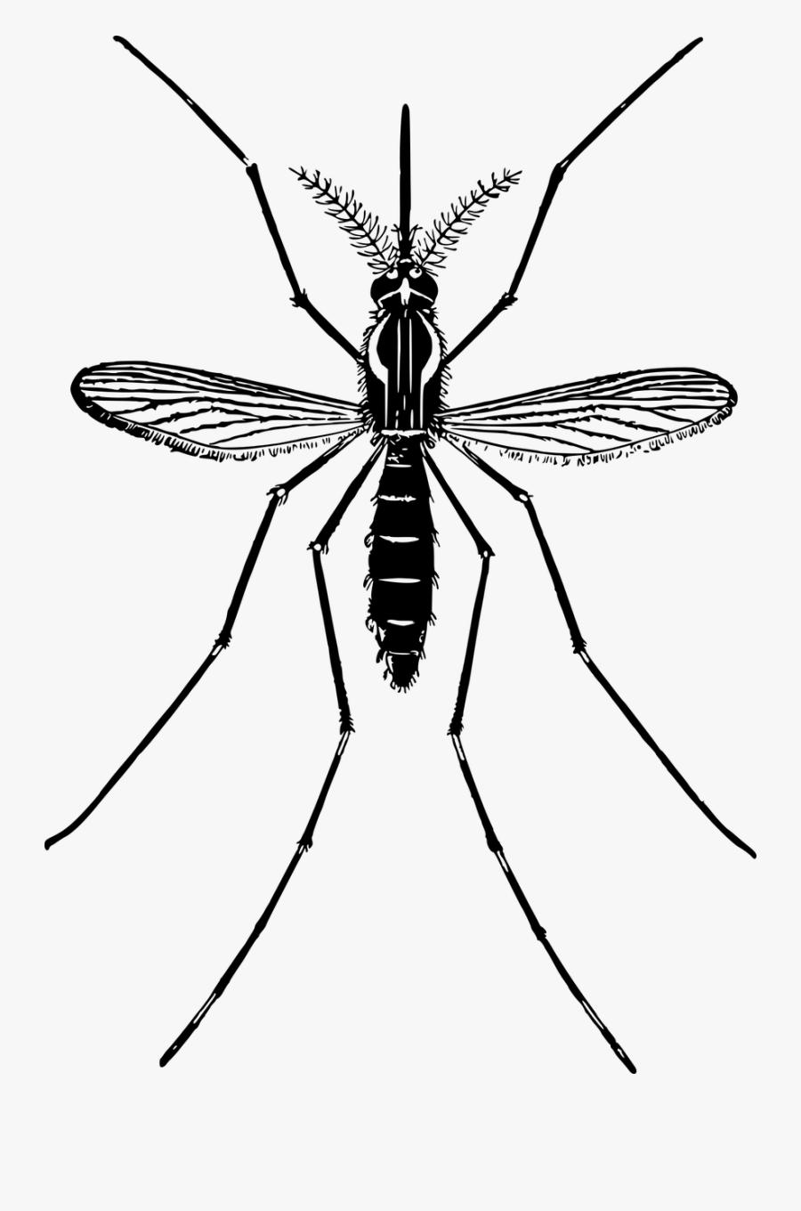 Animal Fly Insect Free Picture - Clip Art Mosquitoes, Transparent Clipart