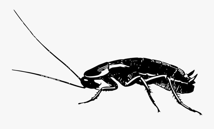 Cockroach Clipart Pest - Cockroach Drawing Png, Transparent Clipart