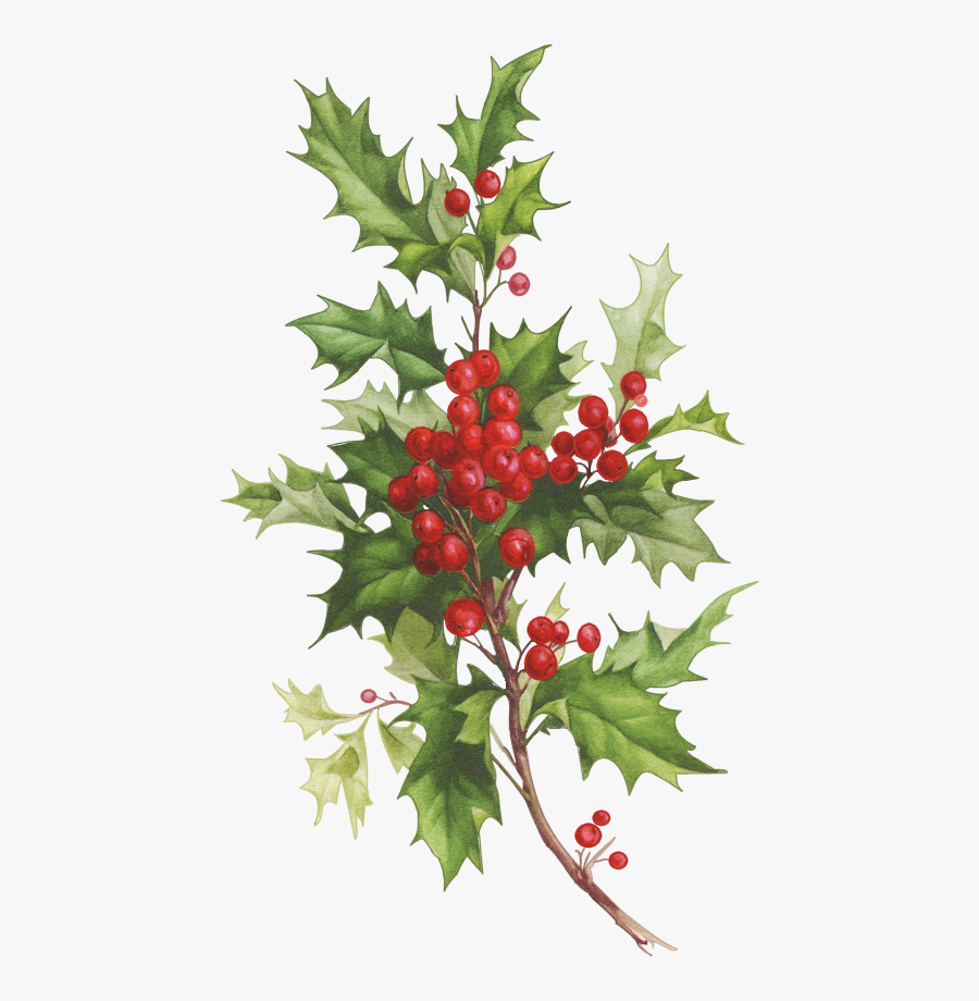 Christmas Holly Watercolor Png, Transparent Clipart