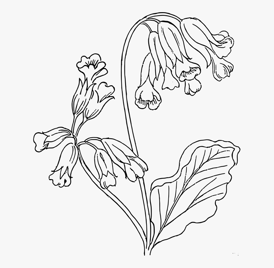 Cotton Plant Drawing - Bluebell Flower Coloring Pages, Transparent Clipart