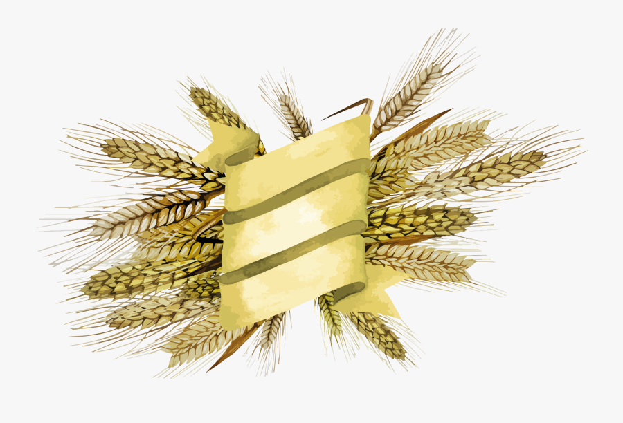 Wheat - Millet Design, Transparent Clipart