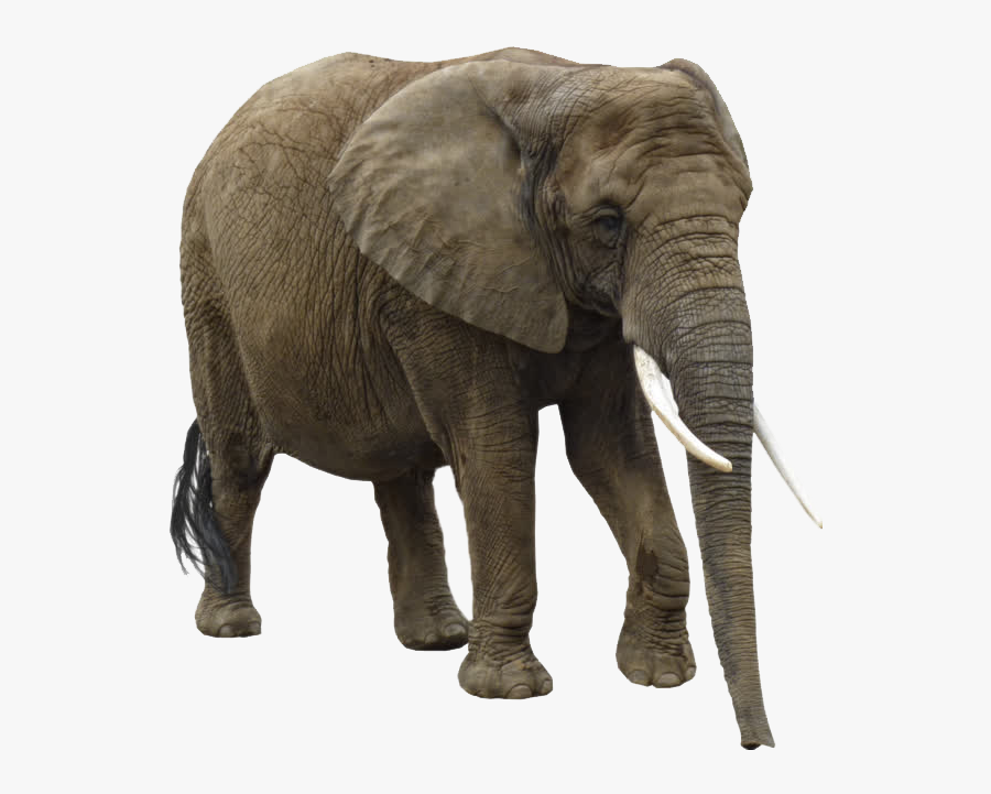 Asian African Clip Art - African Elephant Png, Transparent Clipart