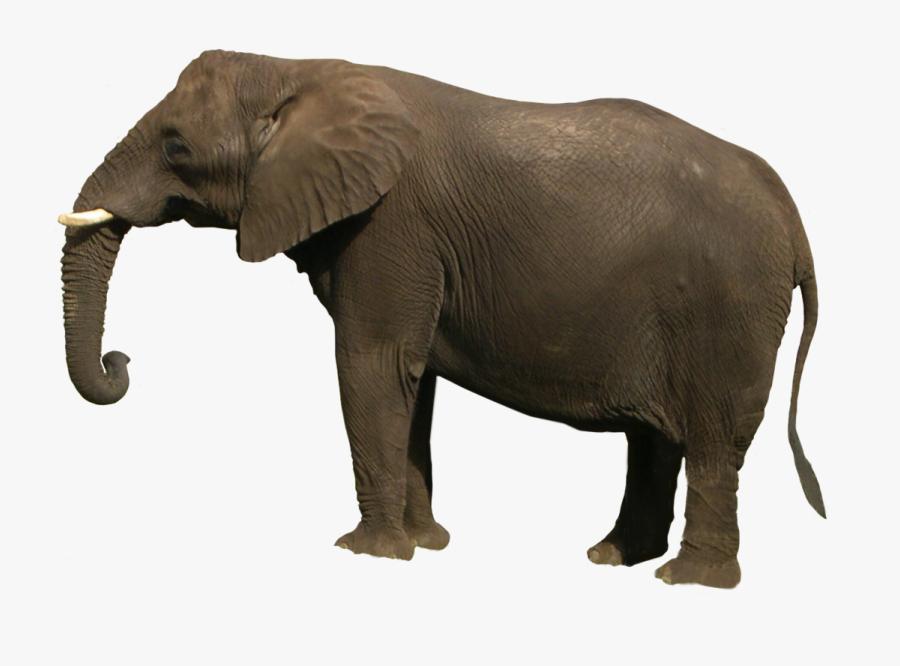 Elephant Images Hd Png, Transparent Clipart