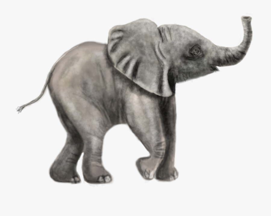 Transparent Elephant Drawing Png Indian Elephant Free Transparent Clipart Clipartkey Search more hd transparent elephant drawing image on kindpng. transparent elephant drawing png