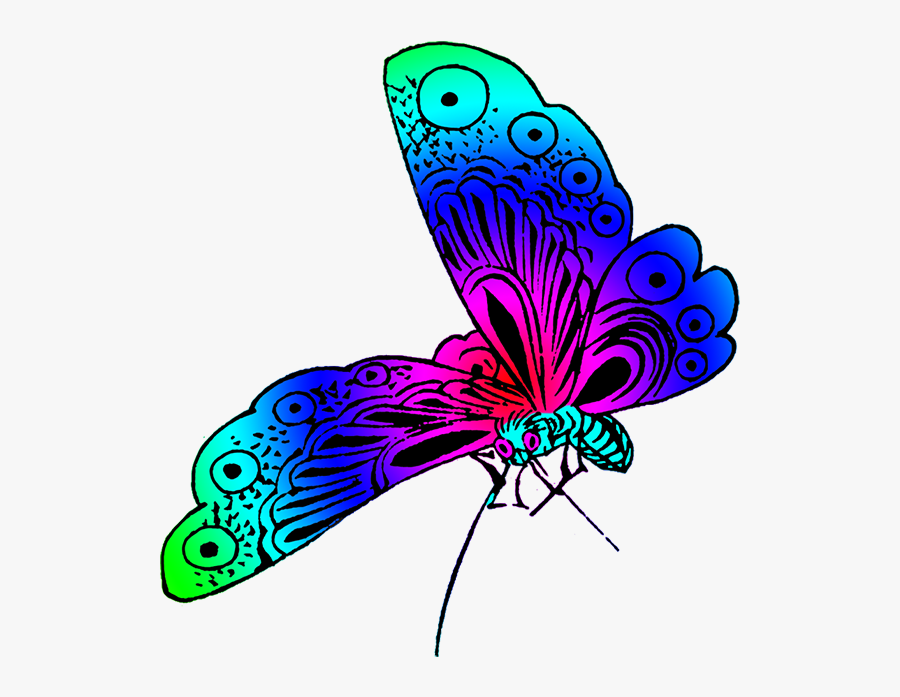 Wonderful Colored Japanese Butterfly - Beautiful Color Of Butterfly, Transparent Clipart