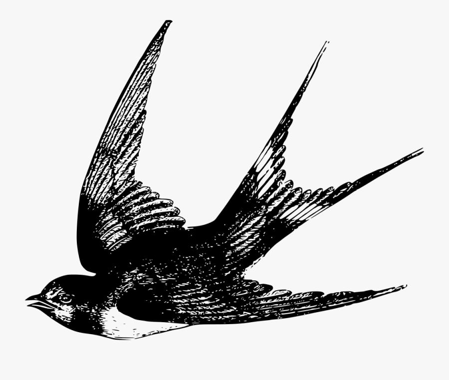 Line,monochrome Photography,vertebrate - She Rules Her Life Like A Bird, Transparent Clipart