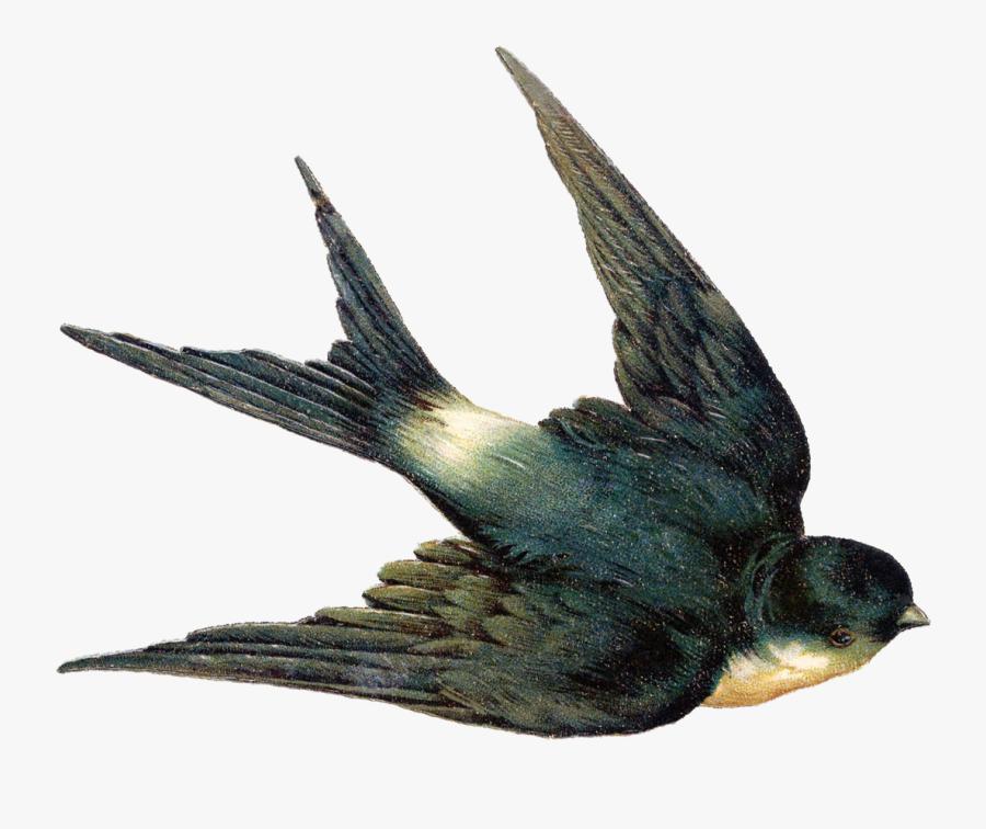 Swallow Bird Png, Transparent Clipart