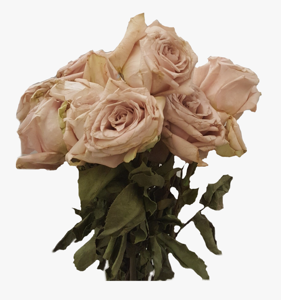 Transparent Dead Flowers Png - Rose Dead Flowers Png, Transparent Clipart