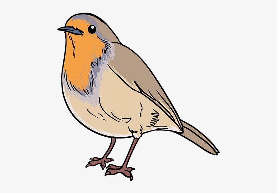 How To Draw Robin - Easy Robin Bird Drawing, Transparent Clipart