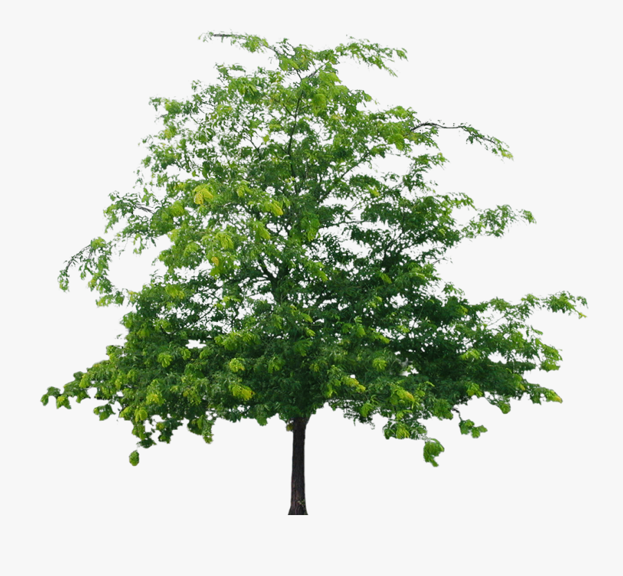 Best Tree Clipart Png - Png File Tree Png, Transparent Clipart
