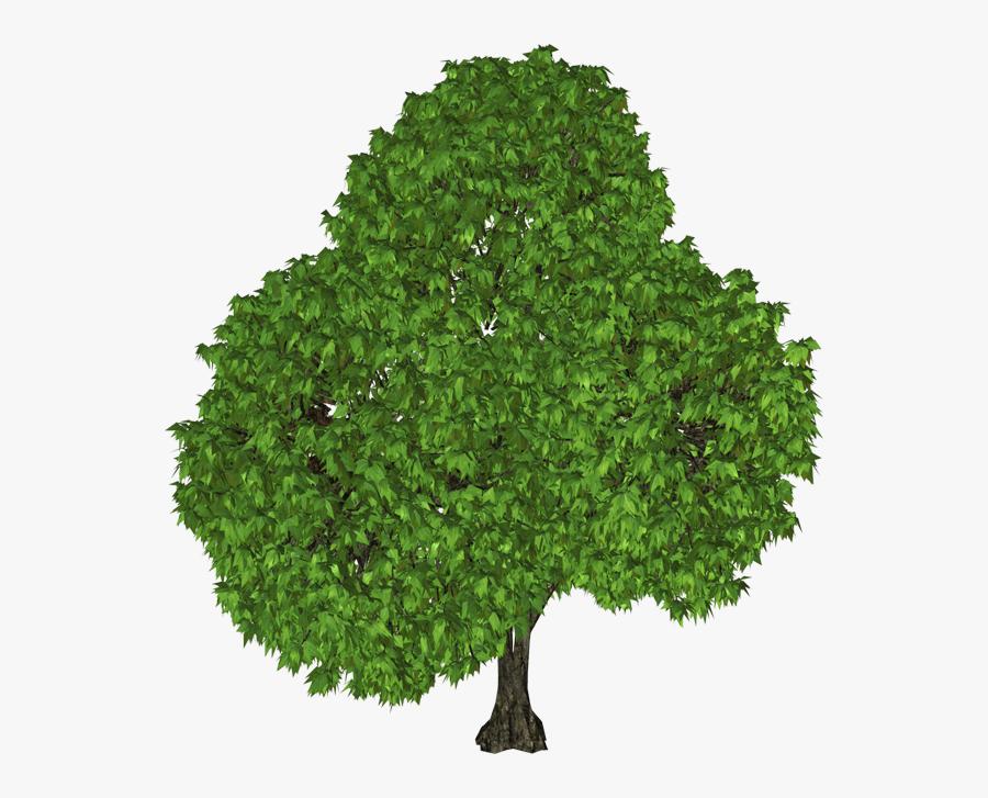 Tree Png, Transparent Clipart