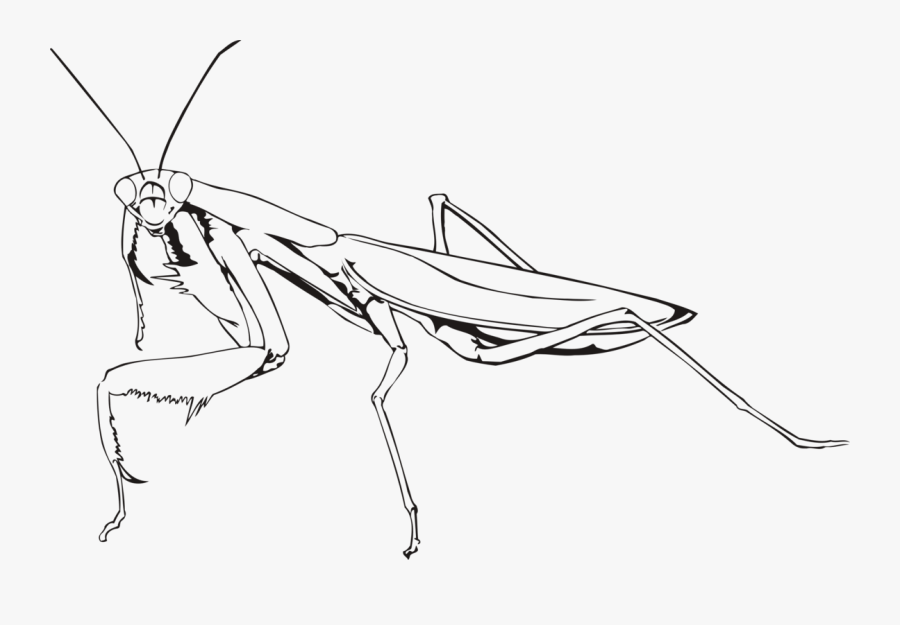 Line Art,angle,area - Praying Mantis Drawing Easy, Transparent Clipart