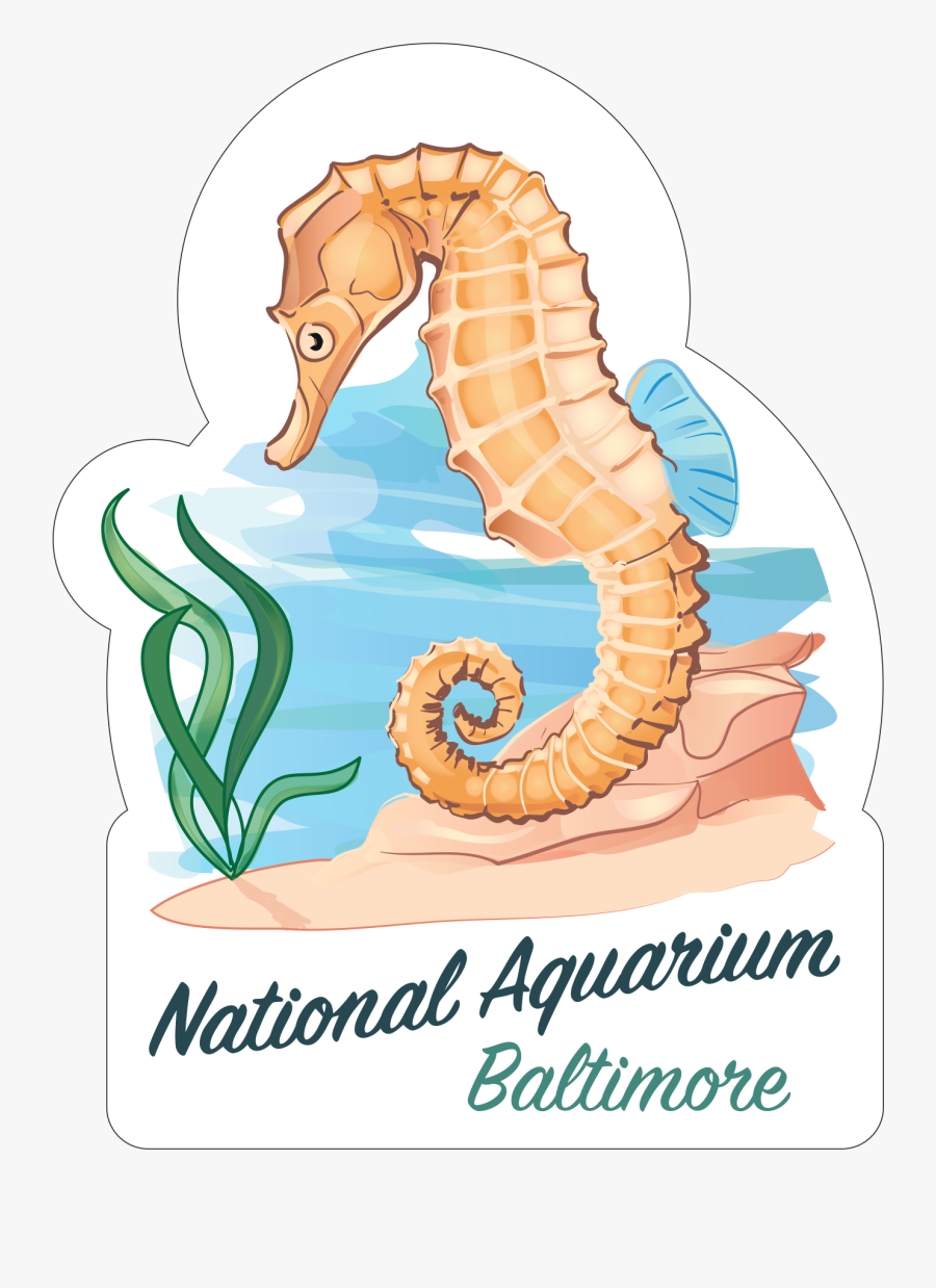 "Seahorse""  Class=""lazyload Lazyload Mirage Featured - Good Luck Charlie, Transparent Clipart"