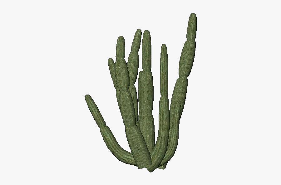 Organ Pipe Cactus Transparent, Transparent Clipart