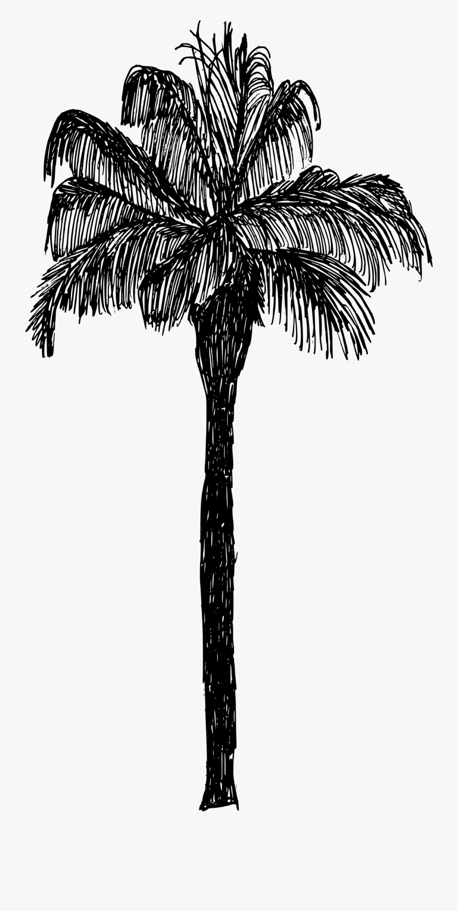 Tree,palm Plant,black And Palm,leaf,date Palm,elaeis,plant - Palm Tree Drawing Png, Transparent Clipart