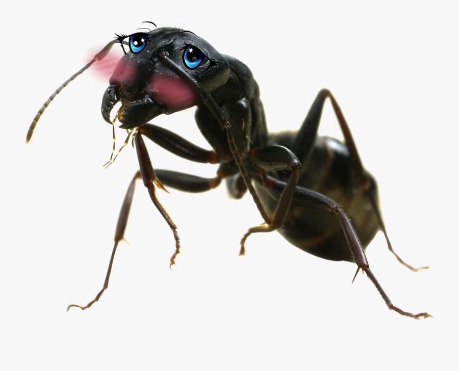 Ant Png Big - Carpenter Ant Png, Transparent Clipart