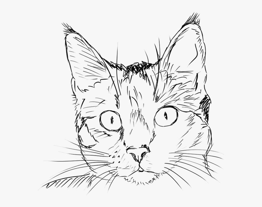 Realistic Cat Face Outline, Transparent Clipart