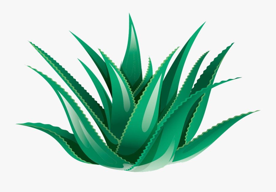 Clipart Black And White Library Aloe Vera Icon Transprent - Transparent Background Aloe Vera Png, Transparent Clipart