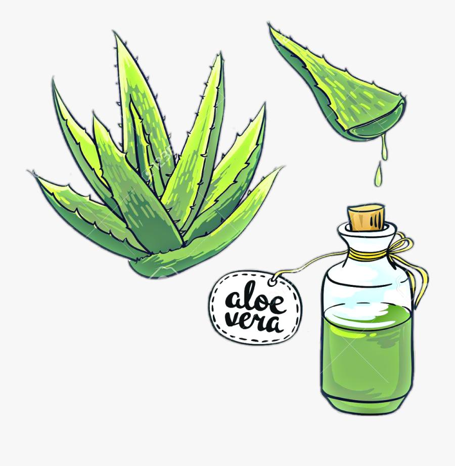 #aloes #aloevera #kaktus #kaktus🌵 #flora #nature #freetoedit - Easy Drawing Of Aloe Vera, Transparent Clipart