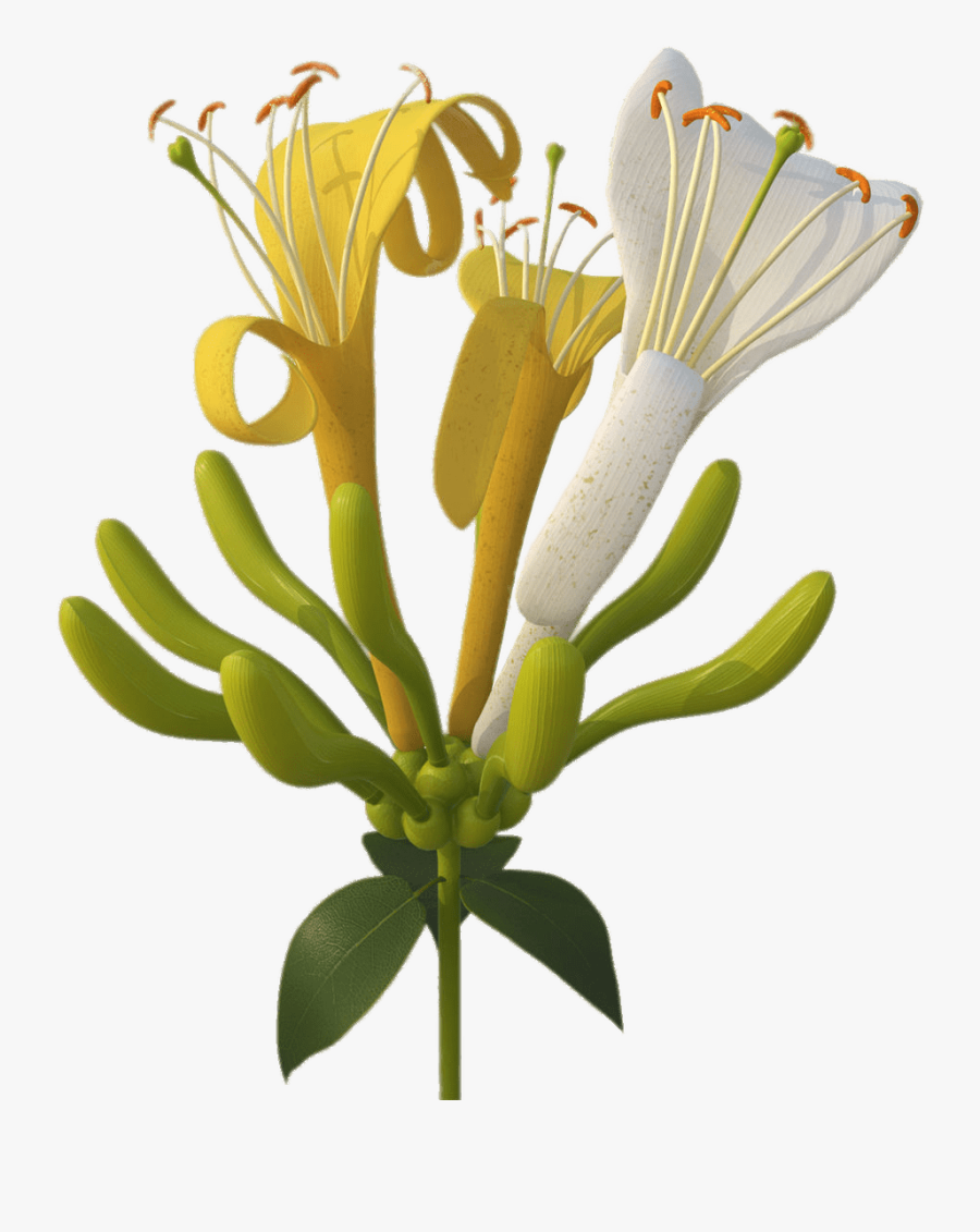 Yellow And White Honeysuckle Flowers - Honeysuckle Png, Transparent Clipart