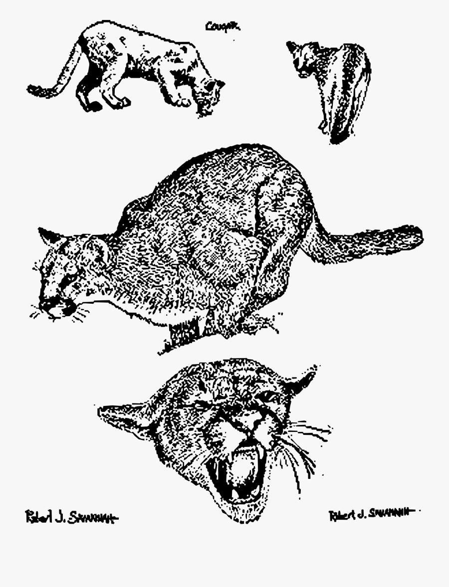 Cougars Clip Arts - Puma Para Colorear, Transparent Clipart