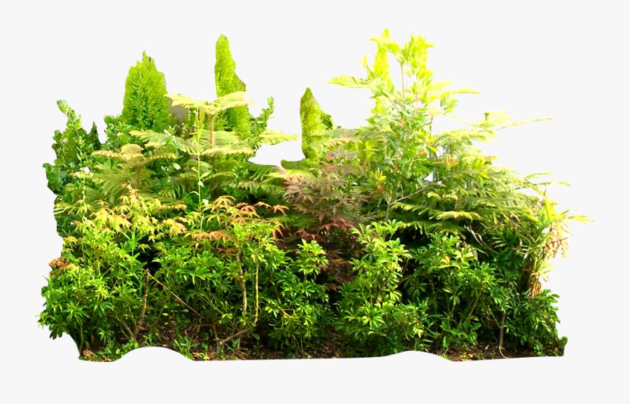 Transparent Tropical Plant Png - Tropical Rainforest Png, Transparent Clipart