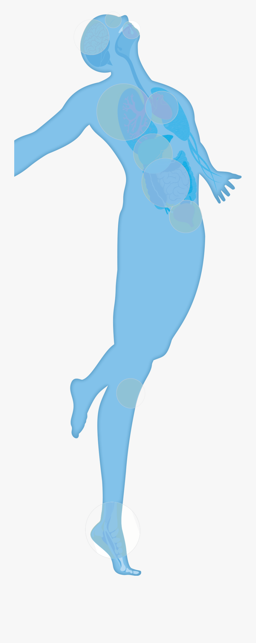 Your Amazing Body Clipart , Png Download - Illustration, Transparent Clipart