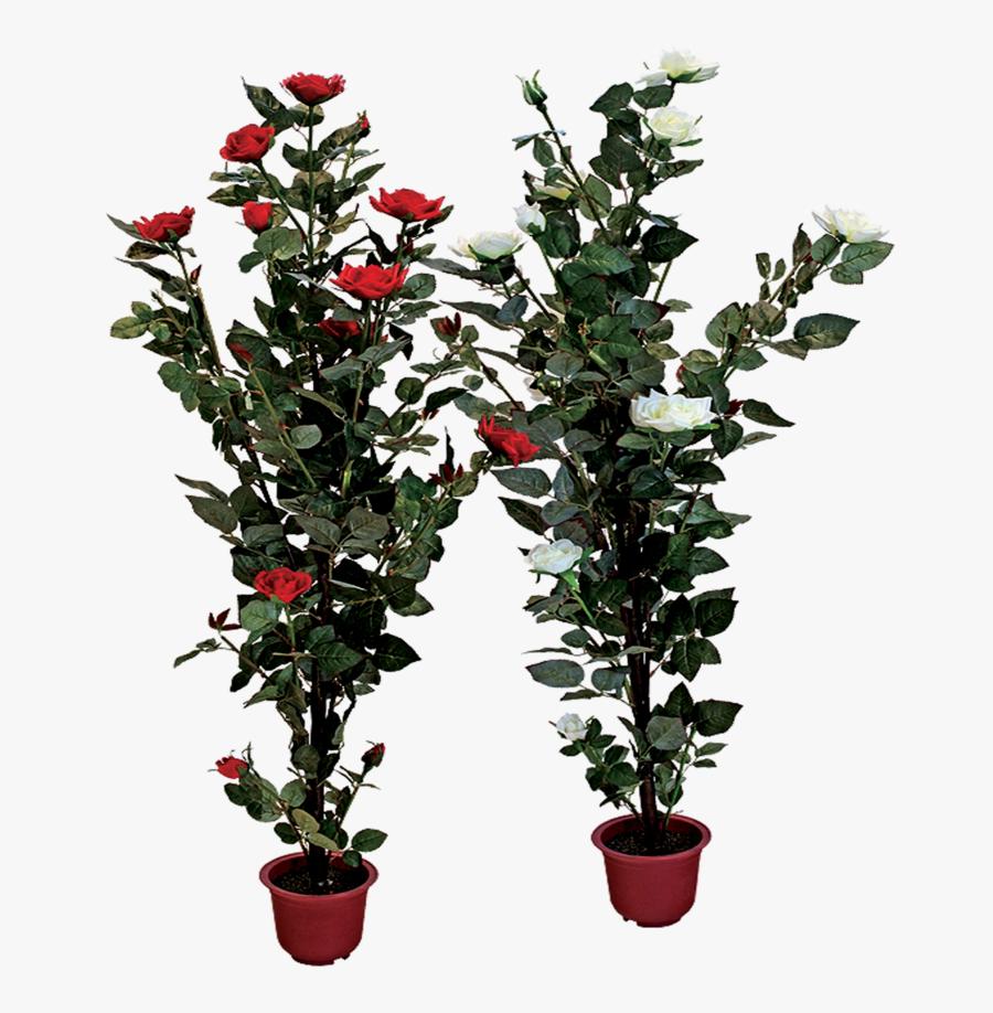 Plants Clipart Potted Plant - Rose Flower Tree Png, Transparent Clipart