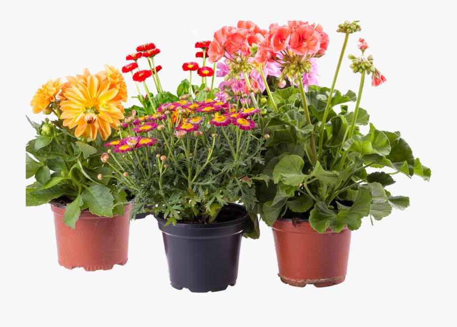 Pot Plant Flower Box Clipart - Pot Flower Plants Png, Transparent Clipart