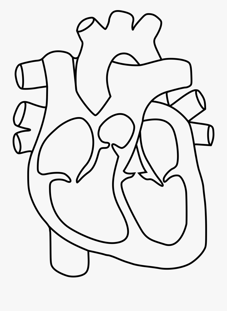 Heart And Labels Drawing At Getdrawings - Human Heart ...
