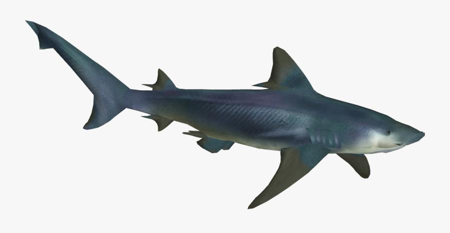 Shark Ganga Bull Great Squaliformes Tiger Holi Clipart - River Shark Transparent, Transparent Clipart