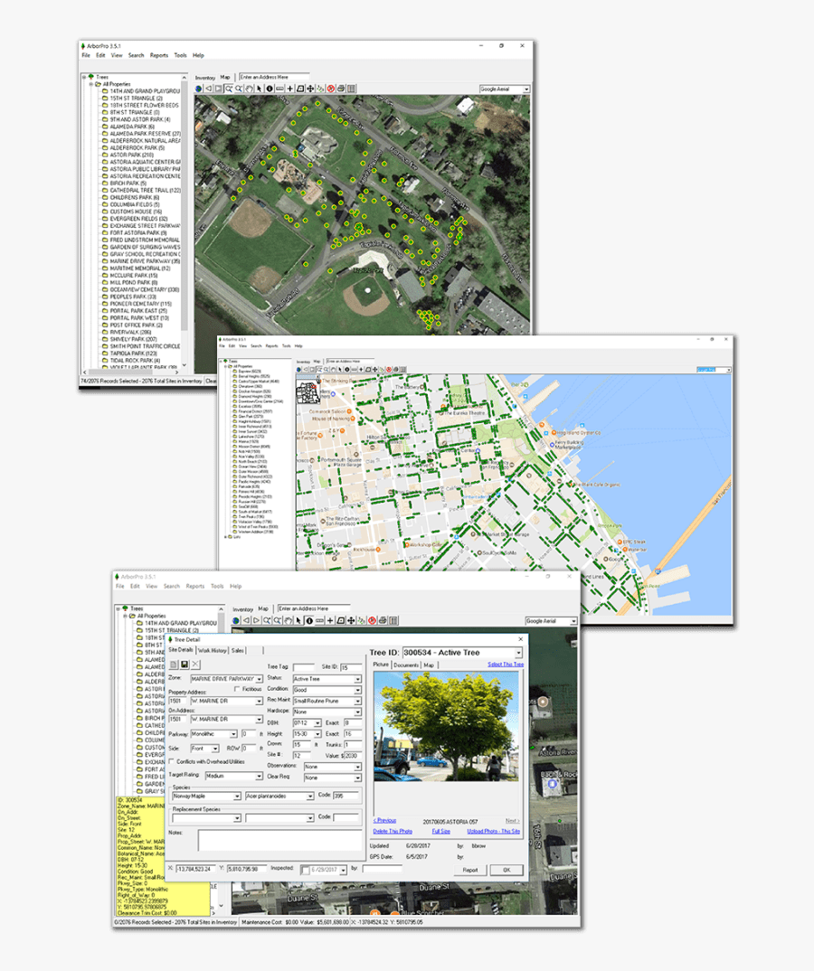 Tree Management Software - Tree, Transparent Clipart