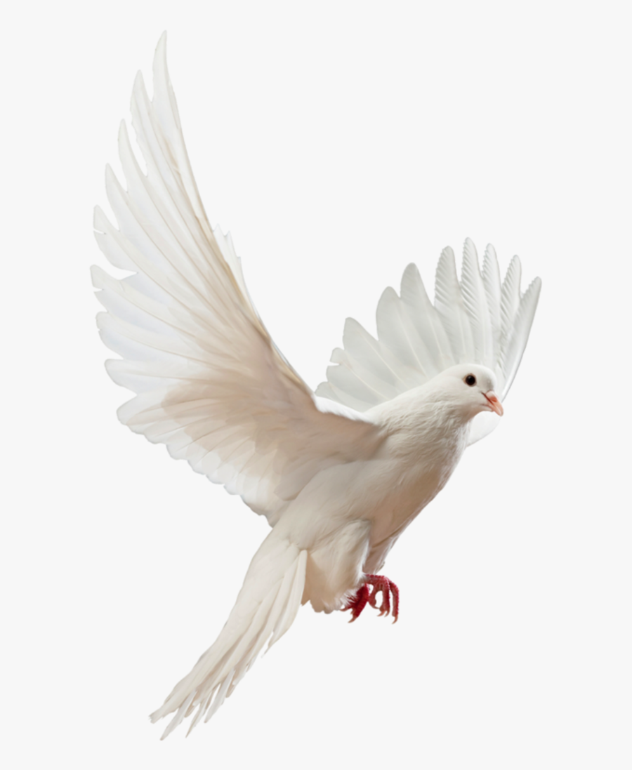 Clip Art Doves Flying Png - Flying White Dove Png , Free ...