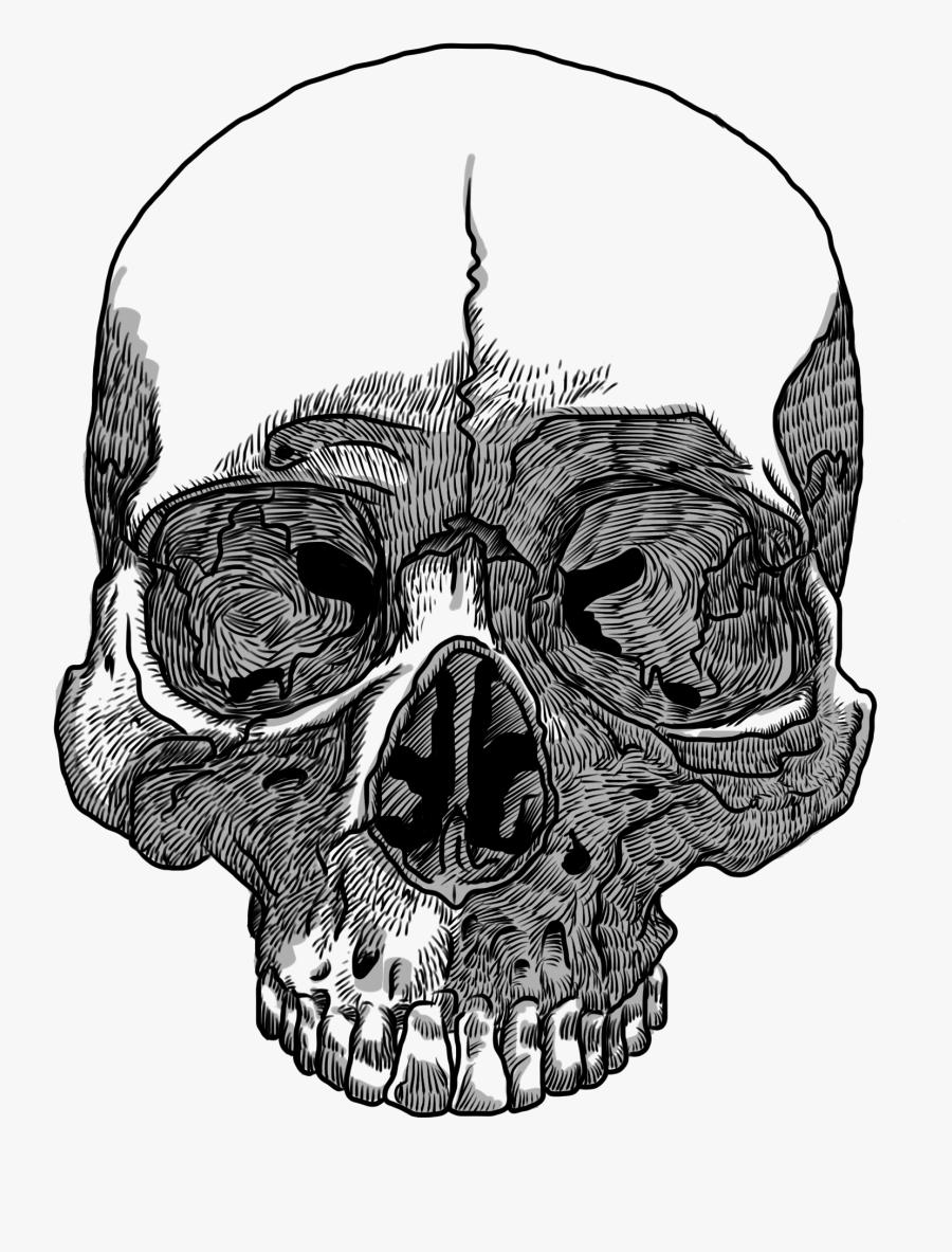 Clip Art Transparent Huge Freebie - Skull Transparent Background No Jaw, Transparent Clipart