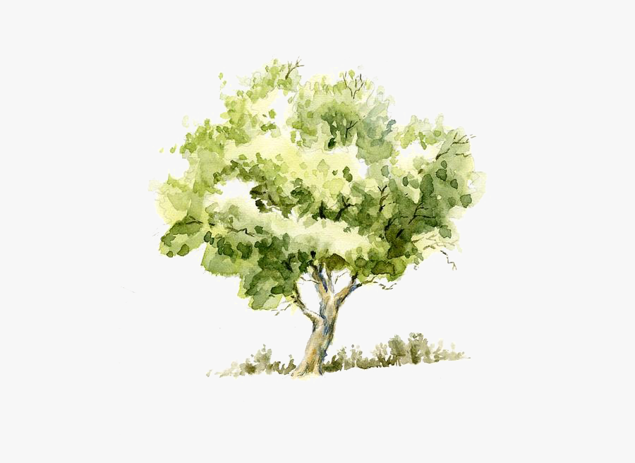 Pencil Sketch Tree Trees Watercolor Painting Drawing - Tree Watercolor, Transparent Clipart