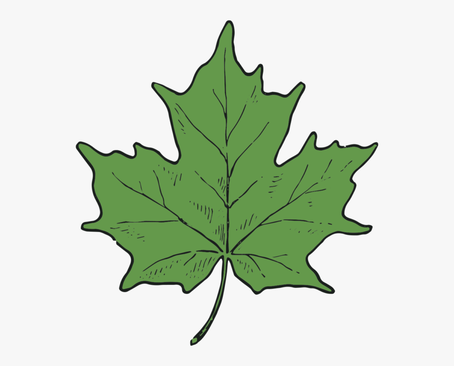 Cad Clip Art Maple Leaf And Seed 3 Grape Leaves Clipart Free Transparent Clipart Clipartkey