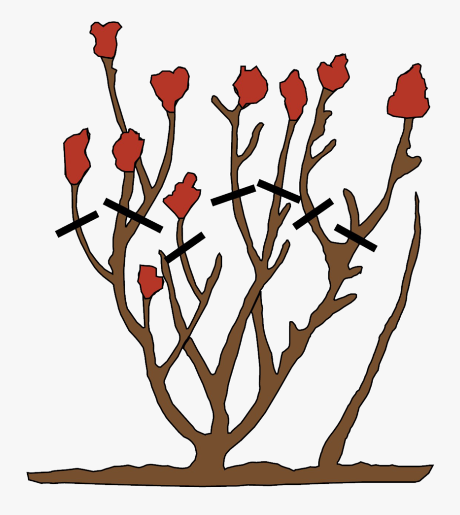 How To Prune Roses, Transparent Clipart