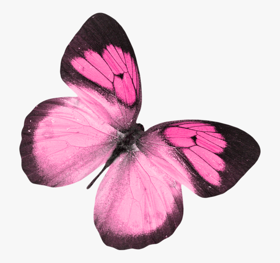 B *✿*dragonfly Dance - Butterfly, Transparent Clipart