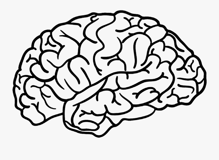 #brain #outline - Outline Of A Brain Drawing Png, Transparent Clipart