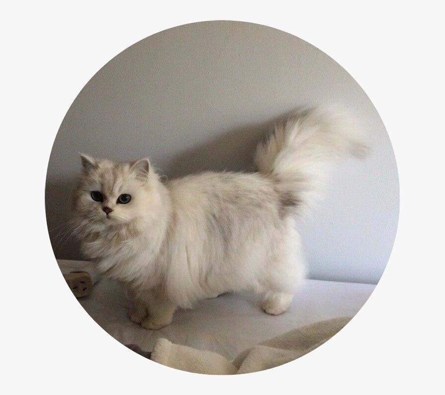 #tumblr #aesthetic #cat #kitty #fluffy #cataesthetic - Cat Aesthetic, Transparent Clipart
