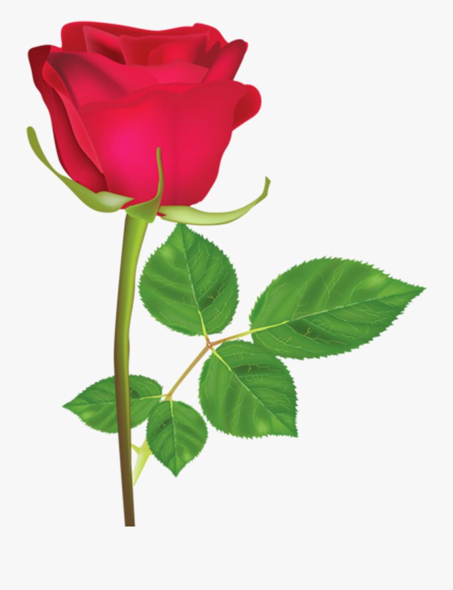Flower,flowering Plant,rose,hybrid Tea Rose,plant,garden - Rosa Roja En Png, Transparent Clipart