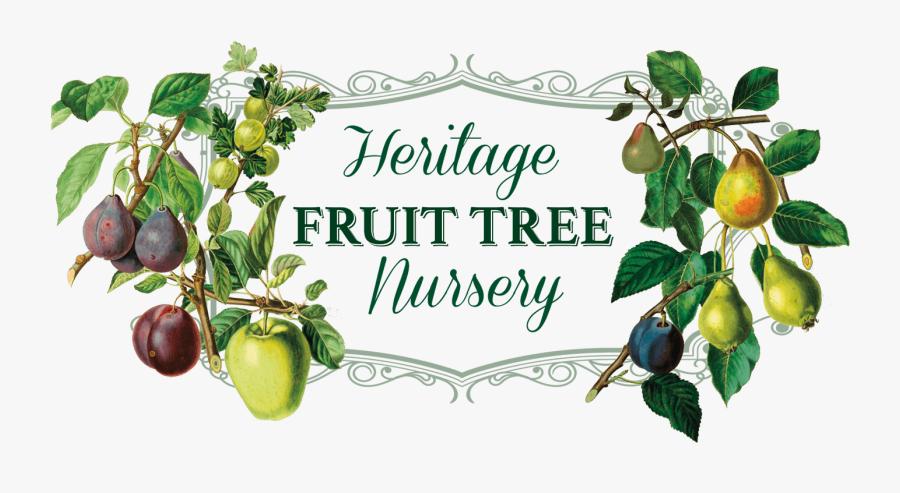 Heritage Fruit Tree Nursery Logo - Heritage Fruit Trees, Transparent Clipart
