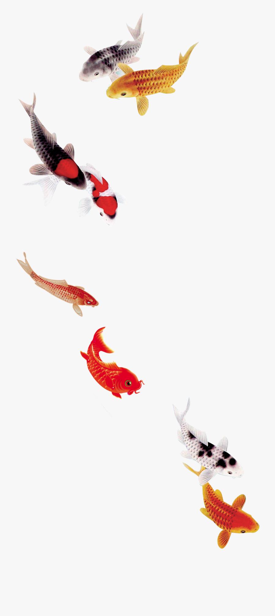 Koi Fish Transparent Koi Fish Png Free Transparent Clipart Clipartkey