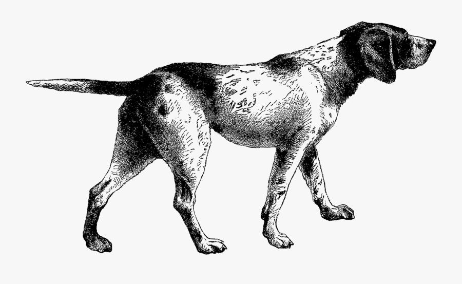 Digital Stamp Design Pointer Dog Digital Vintage Clip - Pointer Dog Illustration, Transparent Clipart